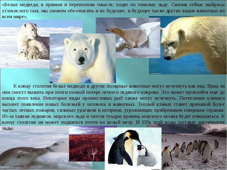 «Белые медведи, в прямом и переносном смысле, ходят по тонкому льду. Снизив с...