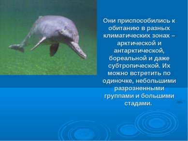 Они приспособились к обитанию в разных климатических зонах – арктической и ан...