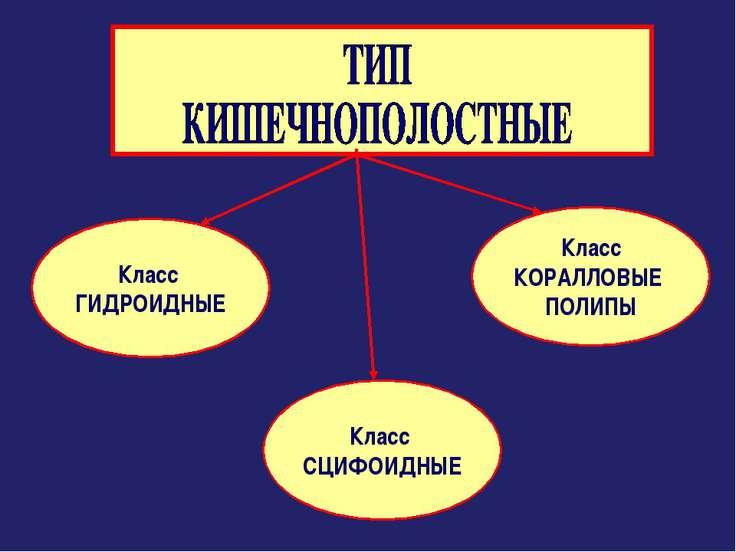 Класс ГИДРОИДНЫЕ Класс СЦИФОИДНЫЕ Класс КОРАЛЛОВЫЕ ПОЛИПЫ