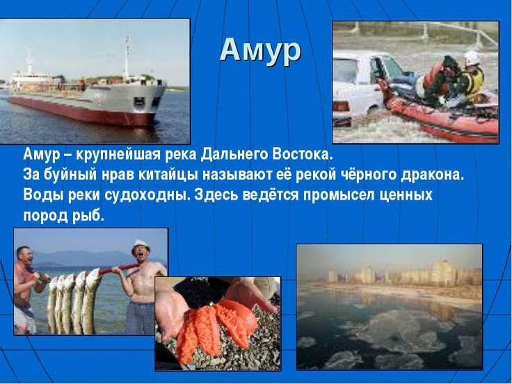 Амур Амур – крупнейшая река Дальнего Востока. За буйный нрав китайцы называют...