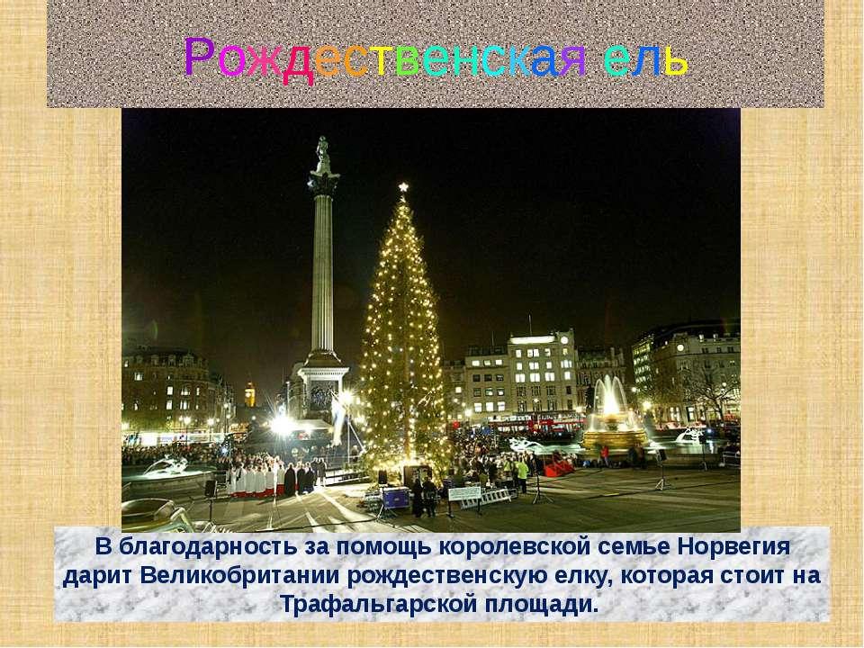 Рождественская ель В благодарность за помощь королевской семье Норвегия дарит...