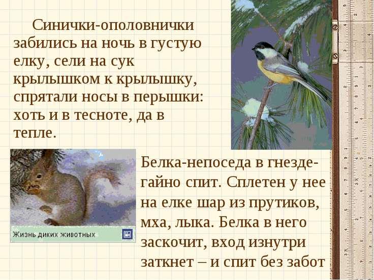 Синички-ополовнички забились на ночь в густую елку, сели на сук крылышком к к...