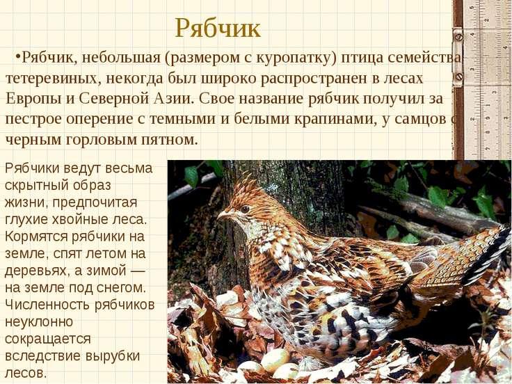 Рябчик Рябчик, небольшая (размером с куропатку) птица семейства тетеревиных, ...