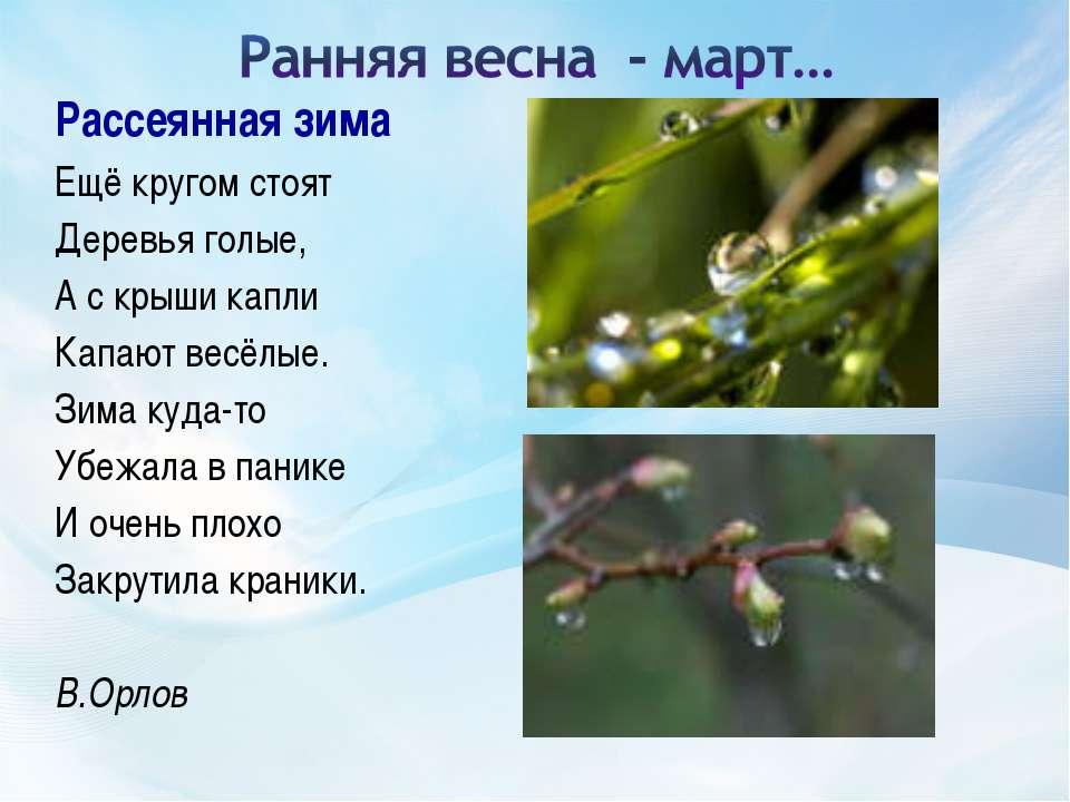 Рассеянная зима Ещё кругом стоят Деревья голые, А с крыши капли Капают весё...