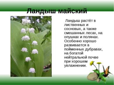 Ландыш майский Ландыш растёт в лиственных и сосновых, а также смешанных лесах...