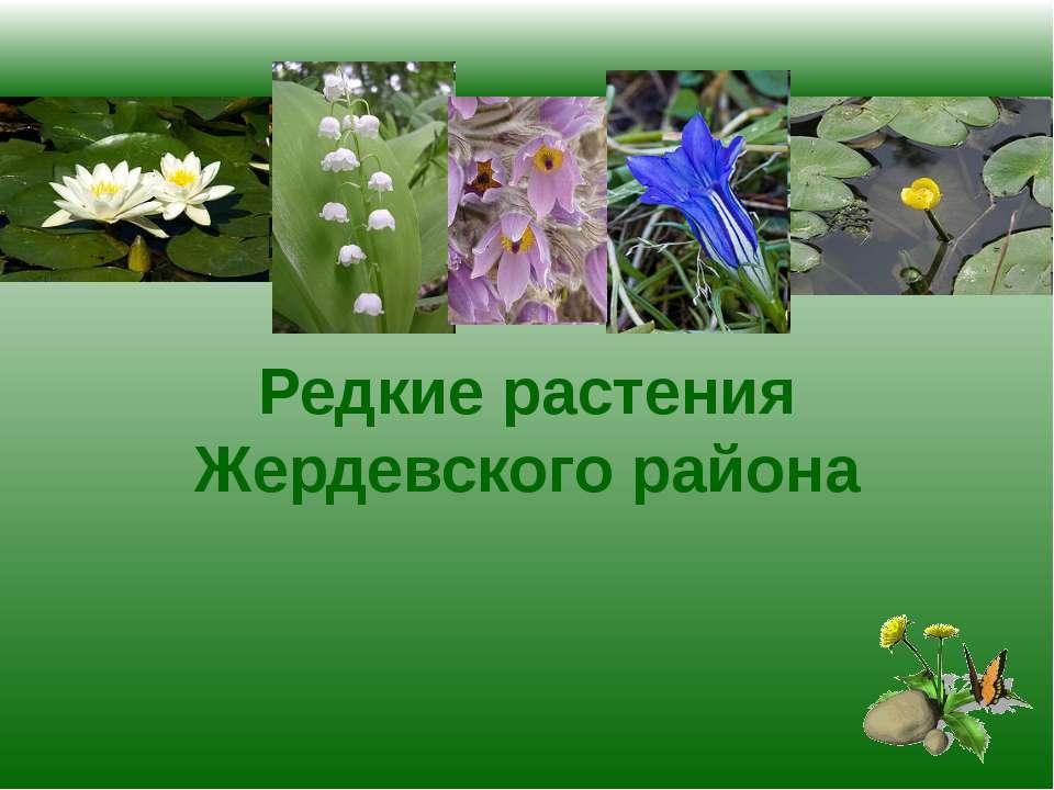 Редкие растения Жердевского района