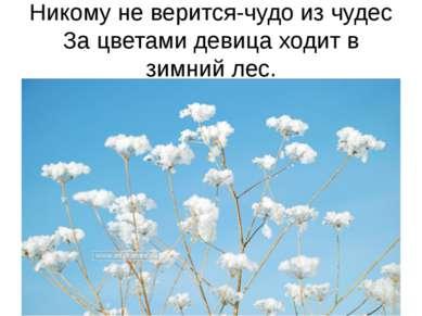 Никому не верится-чудо из чудес За цветами девица ходит в зимний лес.