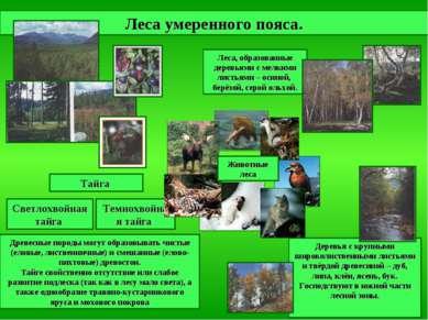 Леса, образованные деревьями с мелкими листьями – осиной, берёзой, серой ольх...