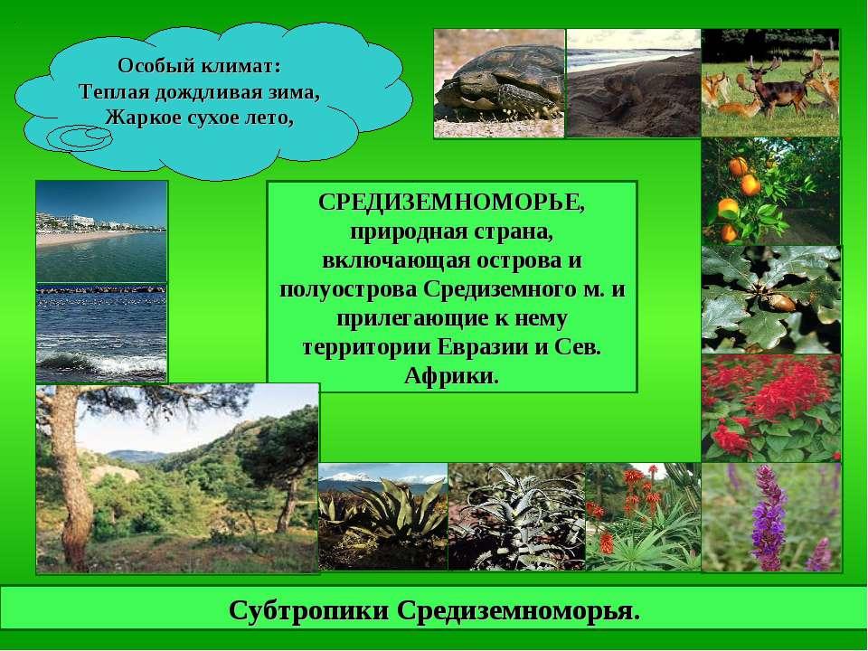 Субтропики Средиземноморья. СРЕДИЗЕМНОМОРЬЕ, природная страна, включающая ост...