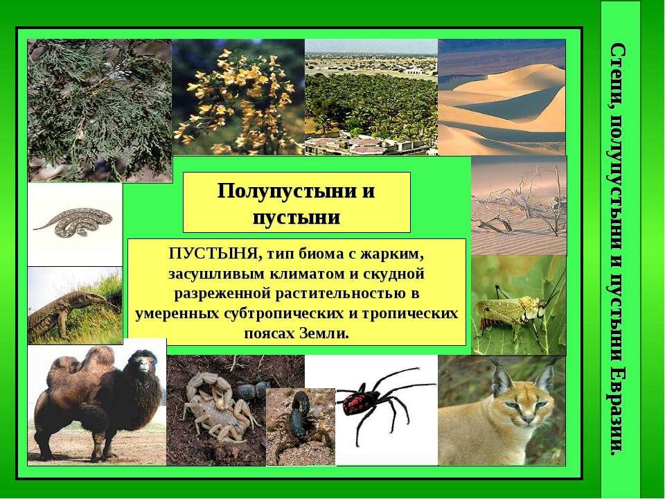 Степи, полупустыни и пустыни Евразии. степи СТЕПЬ, тип биома с безлесной трав...