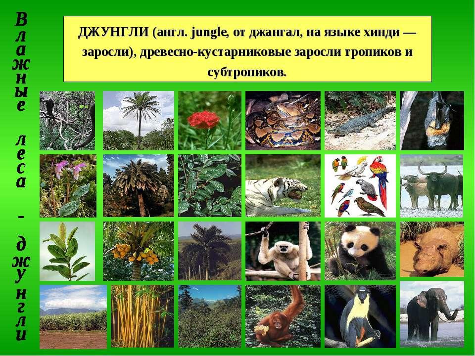 ДЖУНГЛИ (англ. jungle, от джангал, на языке хинди — заросли), древесно-кустар...