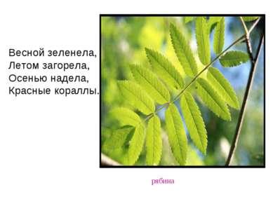 рябина Весной зеленела, Летом загорела, Осенью надела, Красные кораллы.
