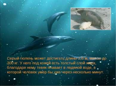 Серый тюлень может достигать длины 2,6 м, массы до 300 кг. У него под кожей е...