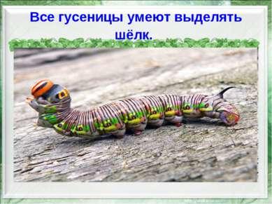 Все гусеницы умеют выделять шёлк.