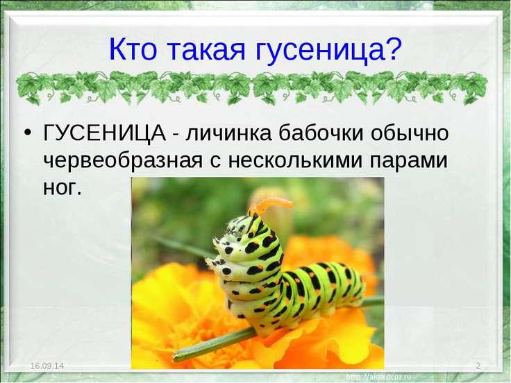 Кто такая гусеница? ГУСЕНИЦА - личинка бабочки обычно червеобразная с несколь...