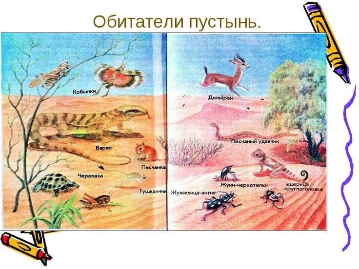 Обитатели пустынь.