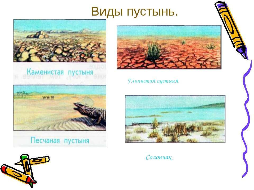 Виды пустынь. Глинистая пустыня Солончак