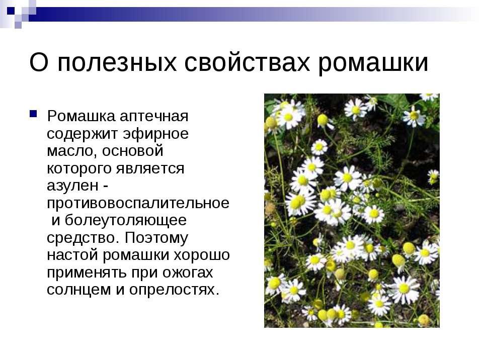 О полезных свойствах ромашки Ромашка аптечная содержит эфирное масло, основой...