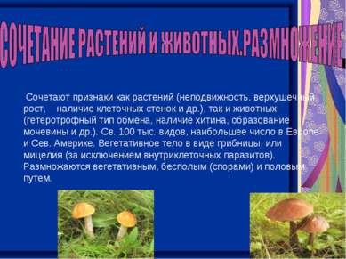 Сочетают признаки как растений (неподвижность, верхушечный рост, наличие клет...