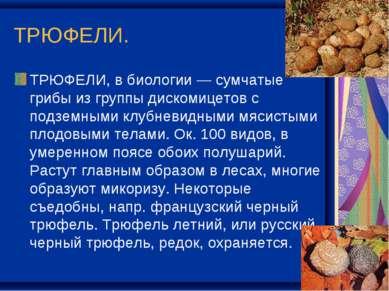 ТРЮФЕЛИ. ТРЮФЕЛИ, в биологии — сумчатые грибы из группы дискомицетов с подзем...