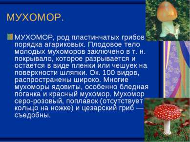 МУХОМОР. МУХОМОР, род пластинчатых грибов порядка агариковых. Плодовое тело м...
