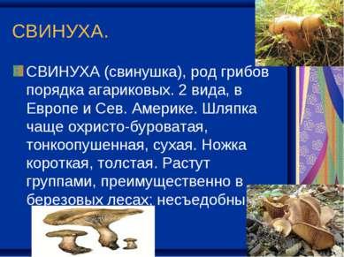 СВИНУХА. СВИНУХА (свинушка), род грибов порядка агариковых. 2 вида, в Европе ...