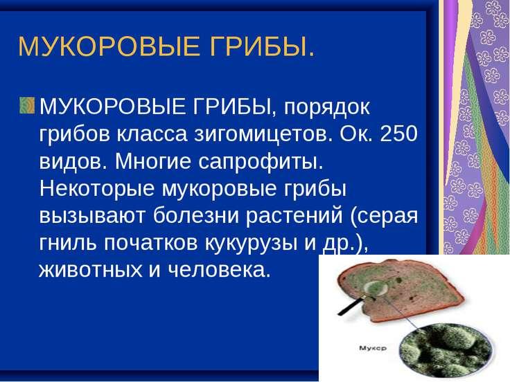 МУКОРОВЫЕ ГРИБЫ. МУКОРОВЫЕ ГРИБЫ, порядок грибов класса зигомицетов. Ок. 250 ...