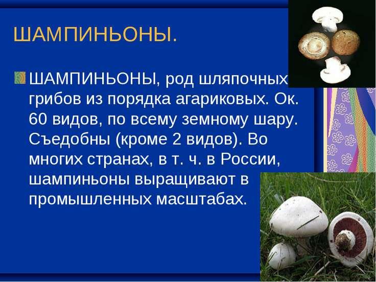 ШАМПИНЬОНЫ. ШАМПИНЬОНЫ, род шляпочных грибов из порядка агариковых. Ок. 60 ви...