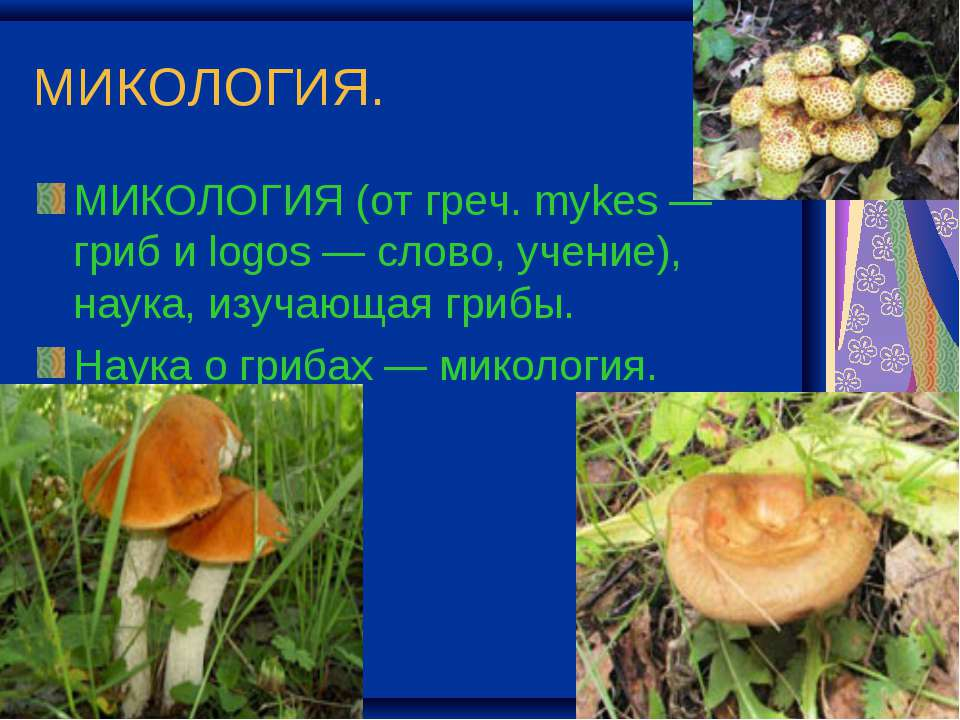 МИКОЛОГИЯ. МИКОЛОГИЯ (от греч. mykes — гриб и logos — слово, учение), наука, ...