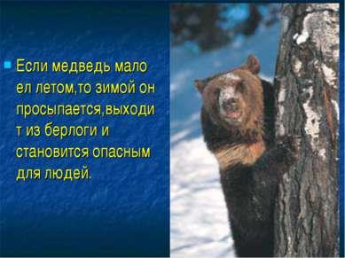 Если медведь мало ел летом,то зимой он просыпается,выходит из берлоги и стано...
