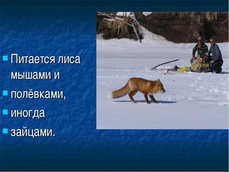 Питается лиса мышами и полёвками, иногда зайцами.