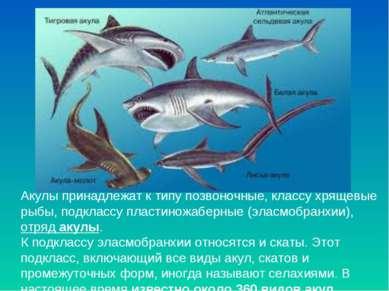 Акулы принадлежат к типу позвоночные, классу хрящевые рыбы, подклассу пластин...
