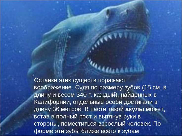 Останки этих существ поражают воображение. Судя по размеру зубов (15 см. в дл...