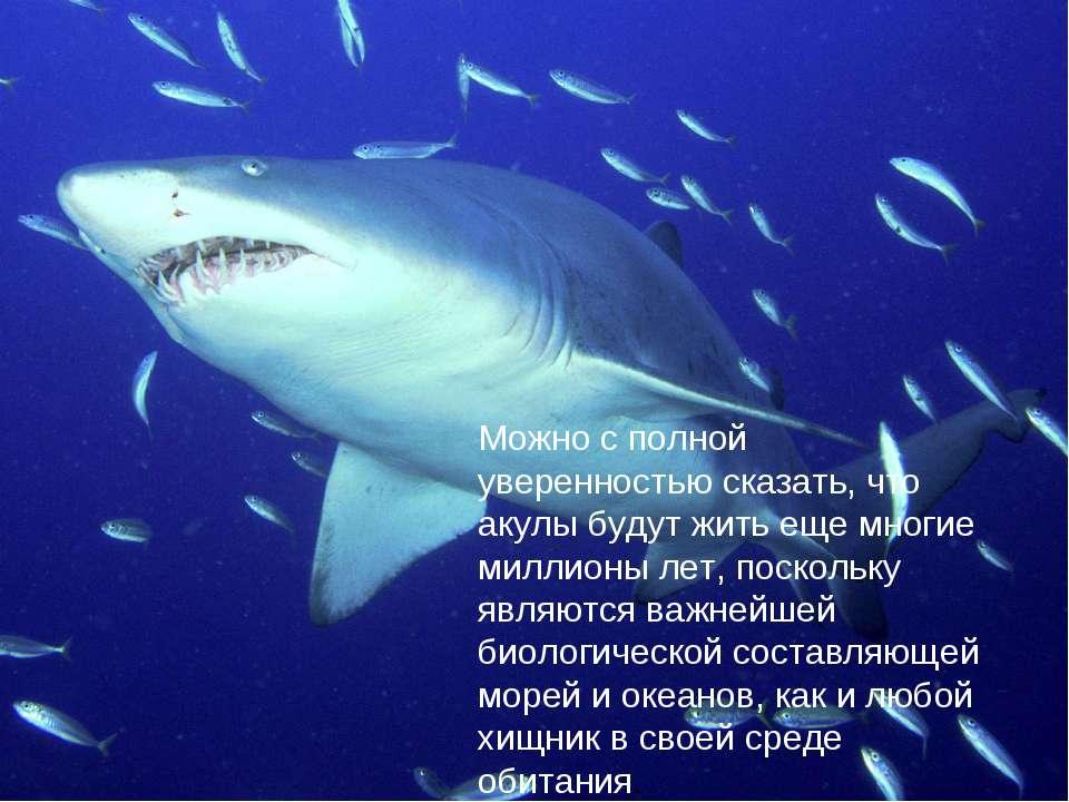 Можно с полной уверенностью сказать, что акулы будут жить еще многие миллионы...