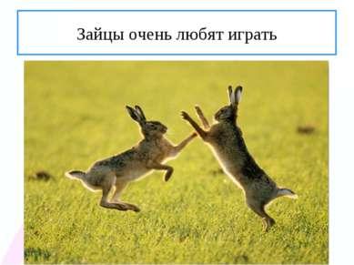 Зайцы очень любят играть