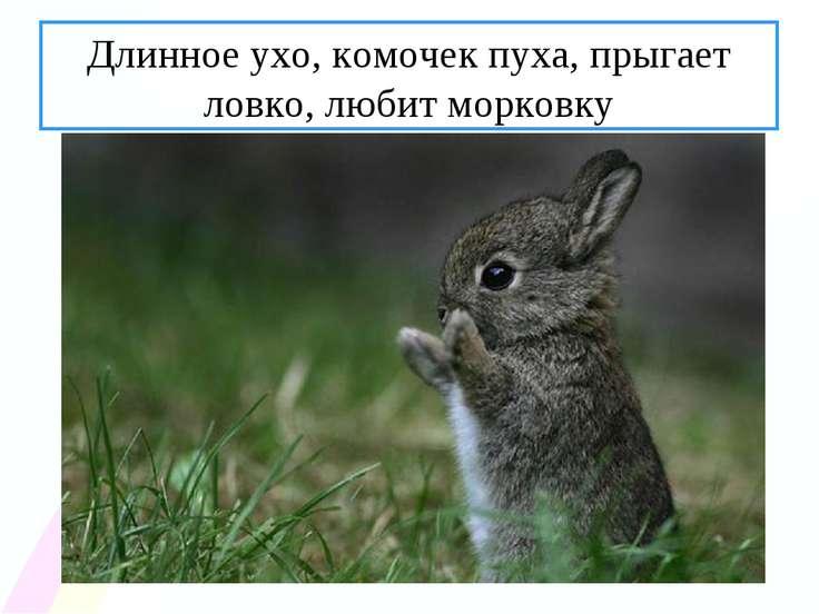 Длинное ухо, комочек пуха, прыгает ловко, любит морковку