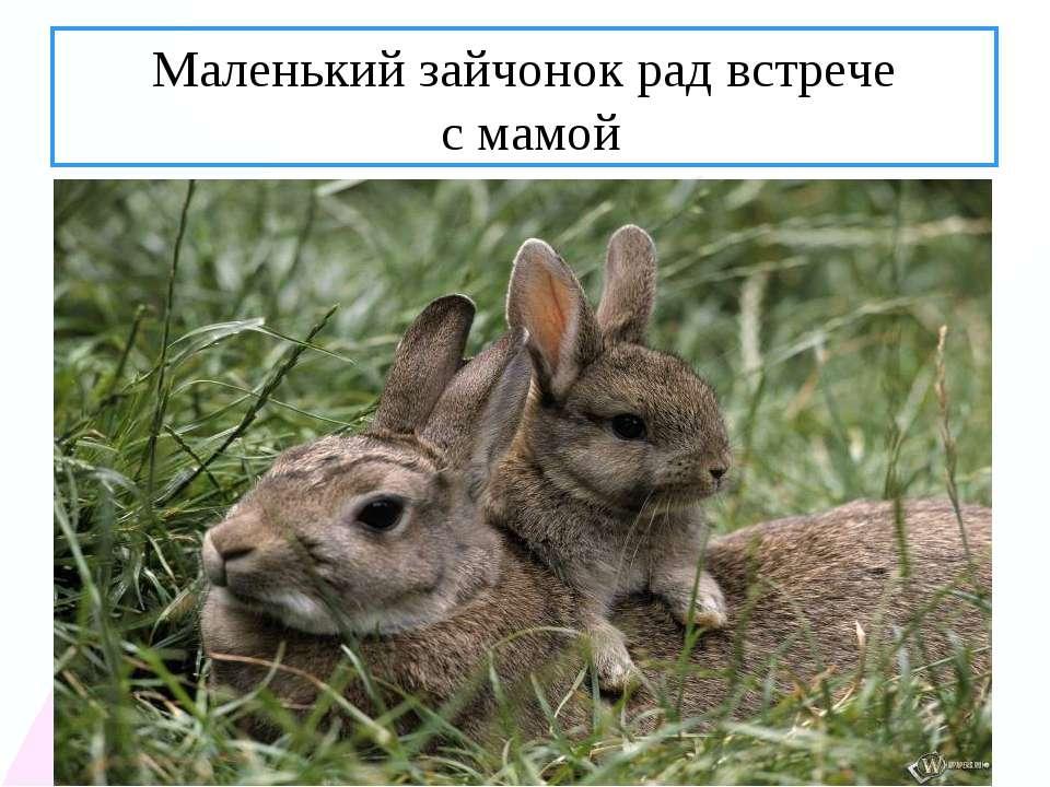 Маленький зайчонок рад встрече с мамой