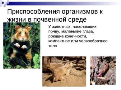 Приспособления организмов к жизни в почвенной среде У животных, населяющих по...
