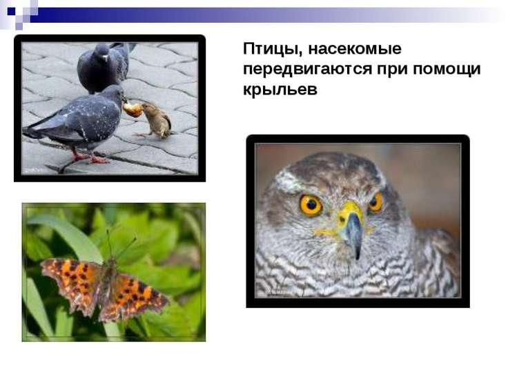 Птицы, насекомые передвигаются при помощи крыльев
