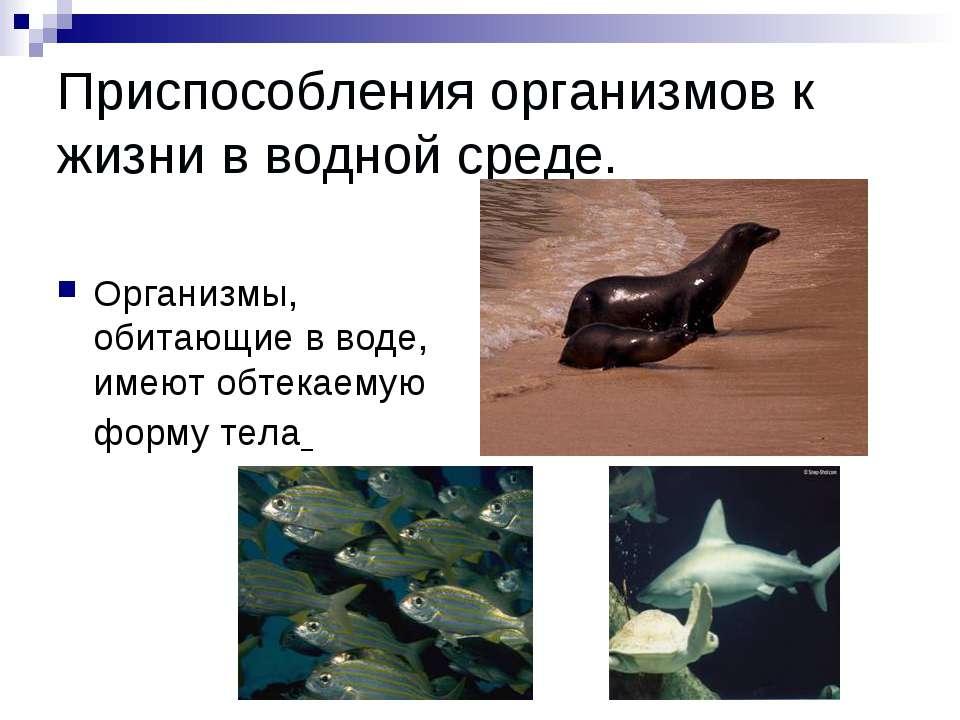 Приспособления организмов к жизни в водной среде. Организмы, обитающие в воде...
