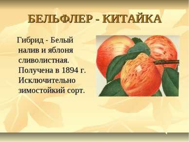БЕЛЬФЛЕР - КИТАЙКА Гибрид - Белый налив и яблоня сливолистная. Получена в 189...