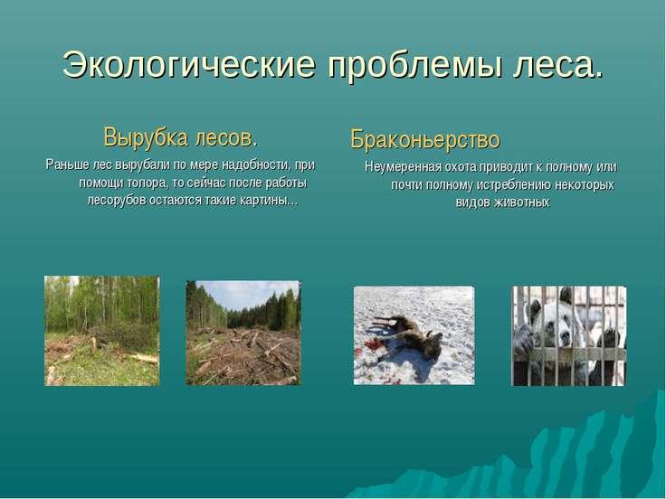 Экологические проблемы леса. Вырубка лесов. Раньше лес вырубали по мере надоб...