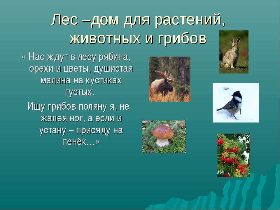 Лес –дом для растений, животных и грибов « Нас ждут в лесу рябина, орехи и цв...