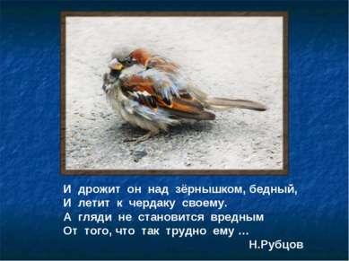 И дрожит он над зёрнышком, бедный, И летит к чердаку своему. А гляди не стано...