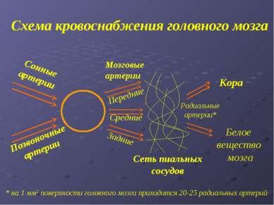 Схема кровоснабжения головного мозга * на 1 мм2 поверхности головного мозга п...
