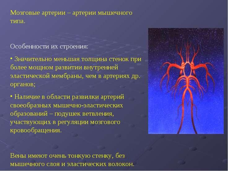 Мозговые артерии – артерии мышечного типа. Особенности их строения: Значитель...