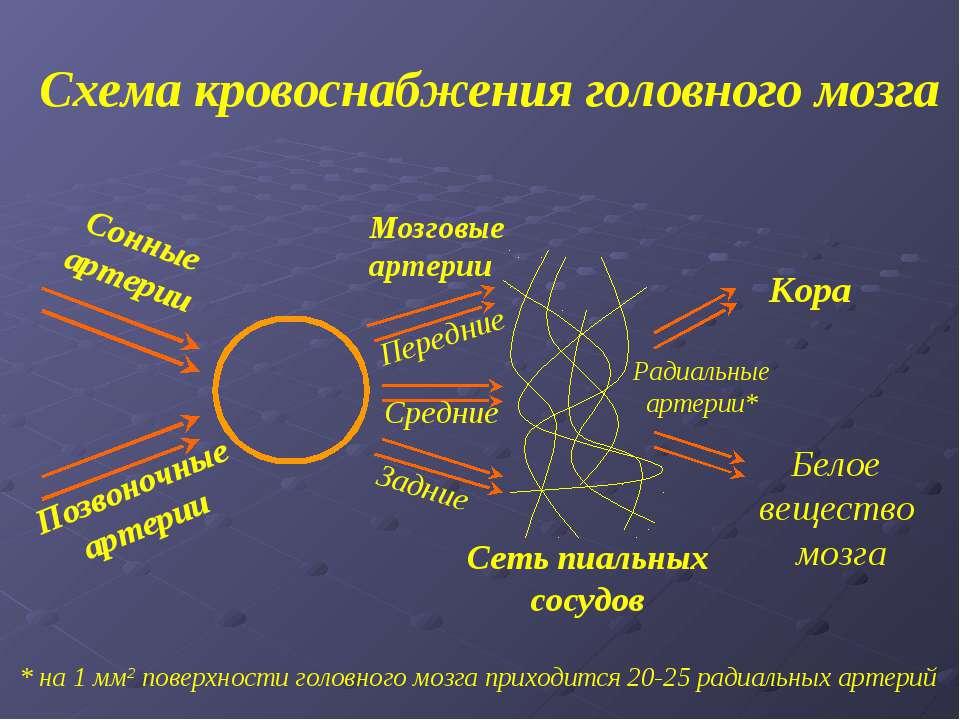 Схема кровоснабжения головного