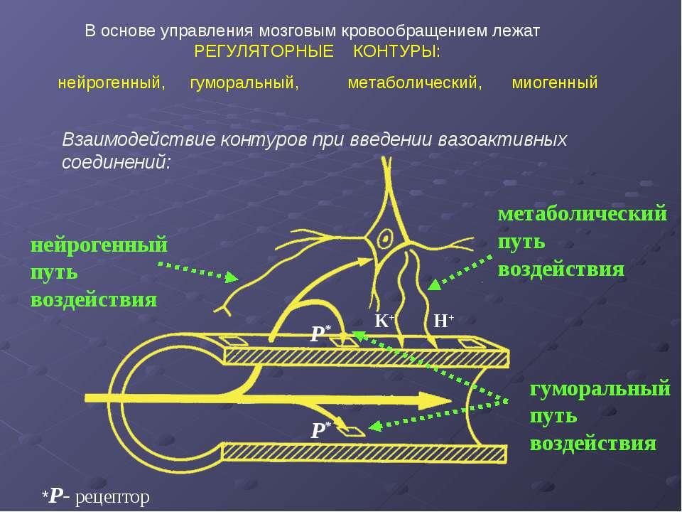 В основе управления мозговым кровообращением лежат РЕГУЛЯТОРНЫЕ КОНТУРЫ: нейр...