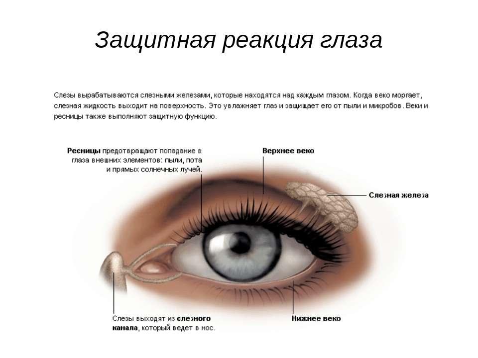 Защитная реакция глаза