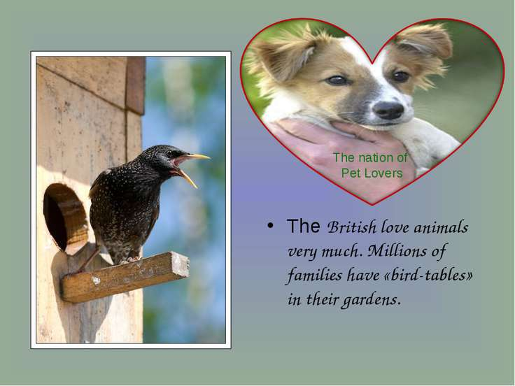 The British love animals very much. Millions of families have «bird-tables» i...